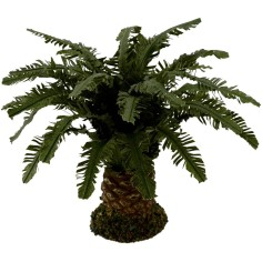 Deluxe dwarf palm available in various heights: