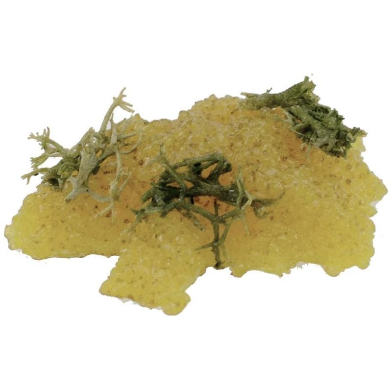 World Presepi Grape yellow accatastate cm 5.5