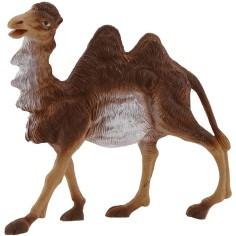 Camel series 16 cm