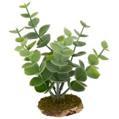 Fat plant cm 12x12 h
