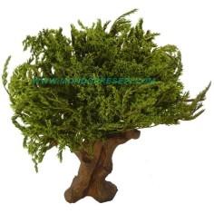 Albero 25-27 cm foglie Verdi