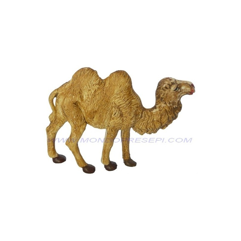 Camel 6 cm
