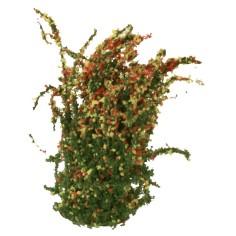 Flowering bush cm 4 h