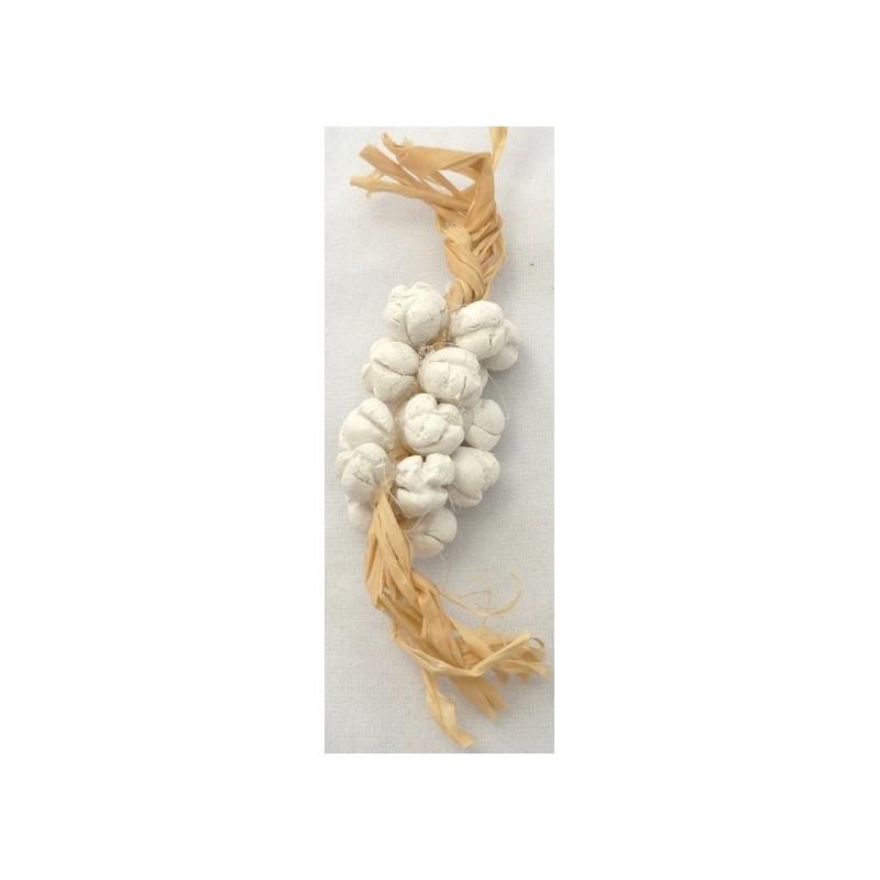 Strain of garlic