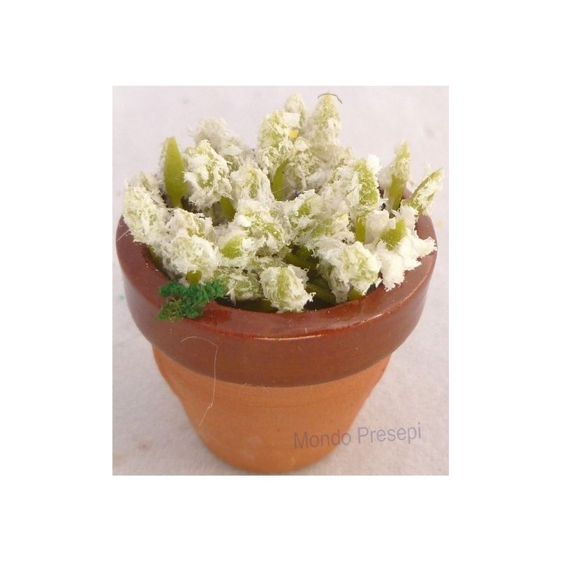 Terracotta vase with flowers