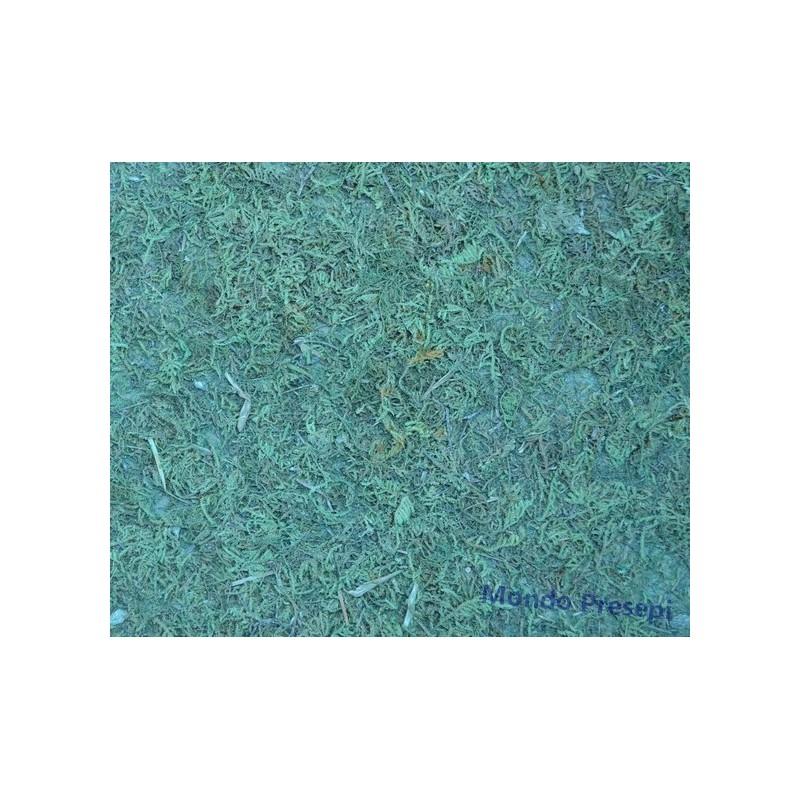 Carta muschio cm 75x50