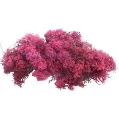Mondo Presepi Lichene rosso scuro 500 gr