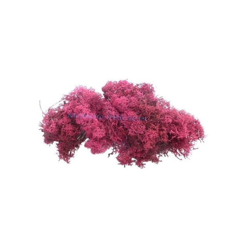 Lichene rosso scuro 500 gr Mondo Presepi