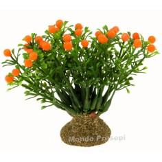 Albero d'arance
