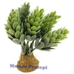 Mondo Presepi Cactus cm 8,5 h.