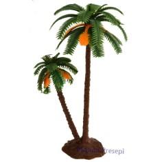 Double palm 14-10 cm
