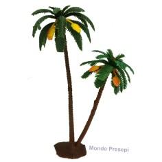 Double palm 22-16 cm