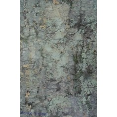 Carta deserto cm 70x50