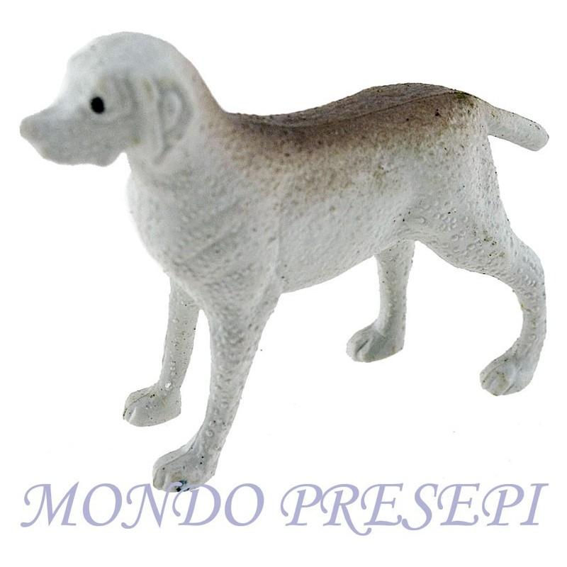 Dog- Cod. EA01
