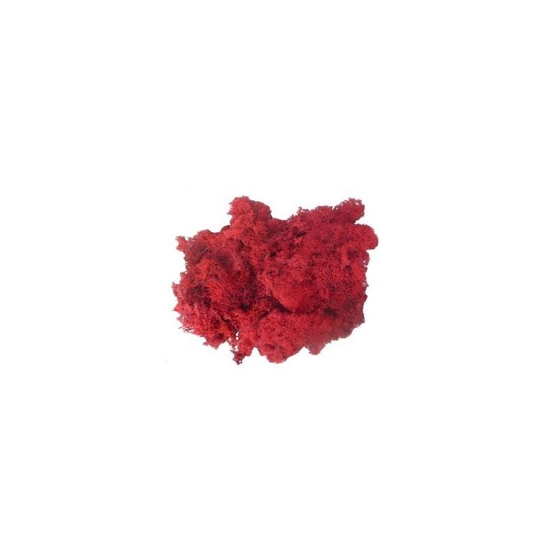 Mondo Presepi Lichene rosso 50 gr