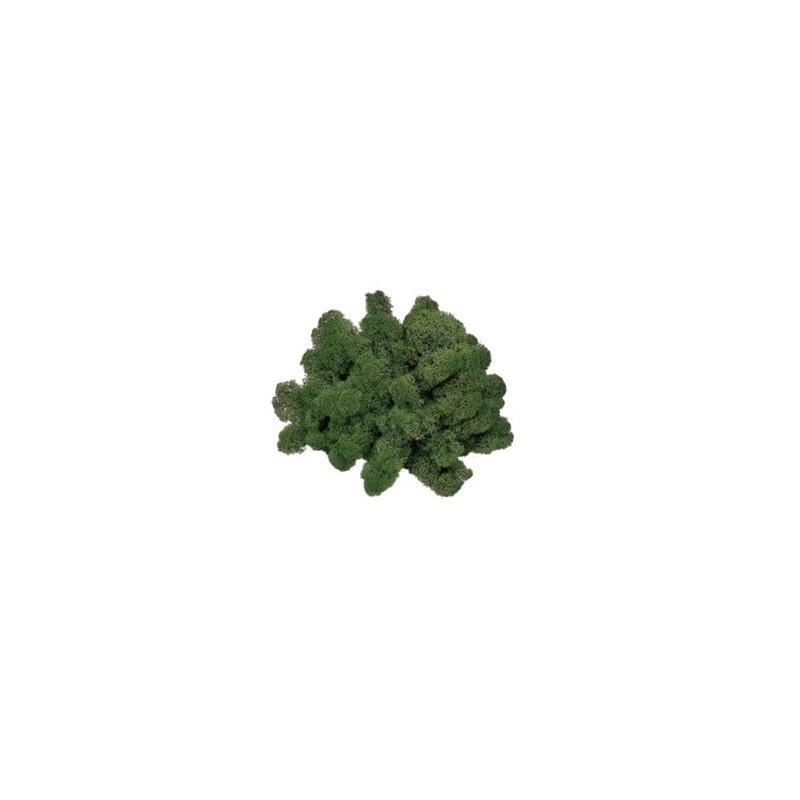 Lichene verde muschio 50 gr - Cod. LVM050