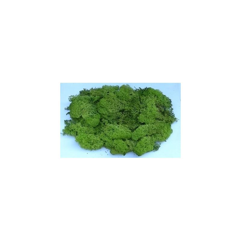 Mondo Presepi Lichene verde 1 Kg - Cod. LV1KG
