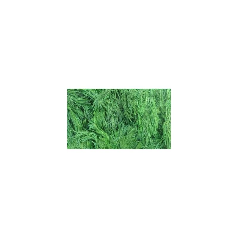 Mondo Presepi Lycopodium 25 gr